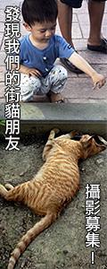 發現我們的街貓朋友 攝影活動